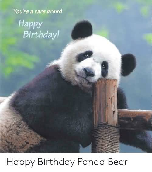 Happy Birthday Panda Bear