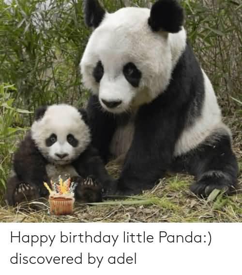 Happy Birthday Little Panda Discovered