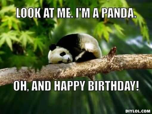 Look At Me I'm A Panda Oh, And Happy Birthday Panda