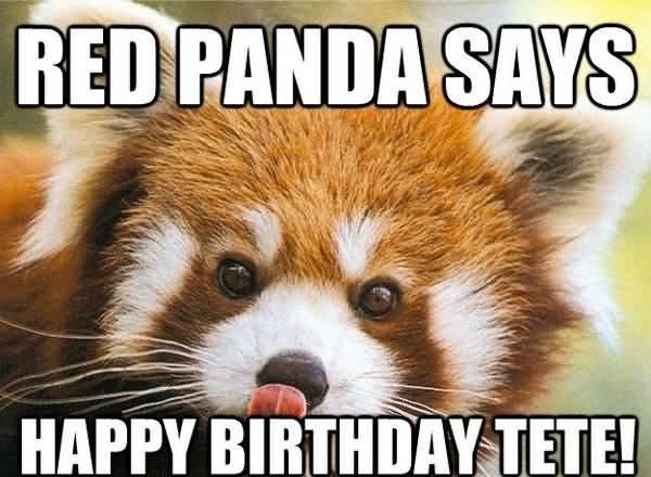 Red Panda Says Happy Birthday Tete