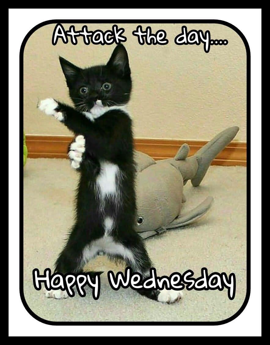 Attack The Dog Happy Wednesday Meme