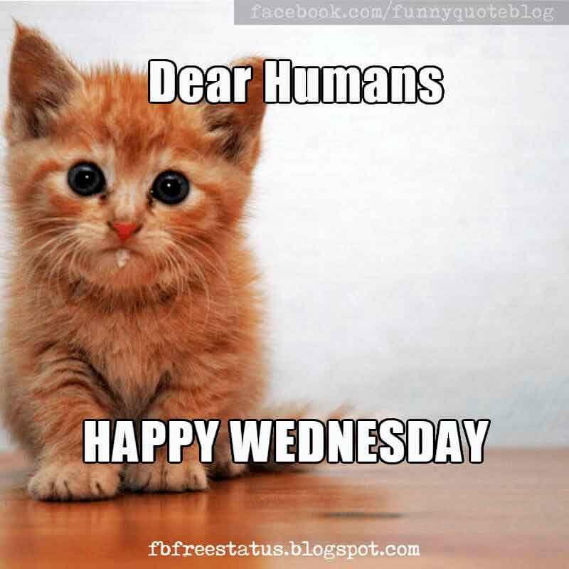 Dear Humans Happy Wednesday Meme