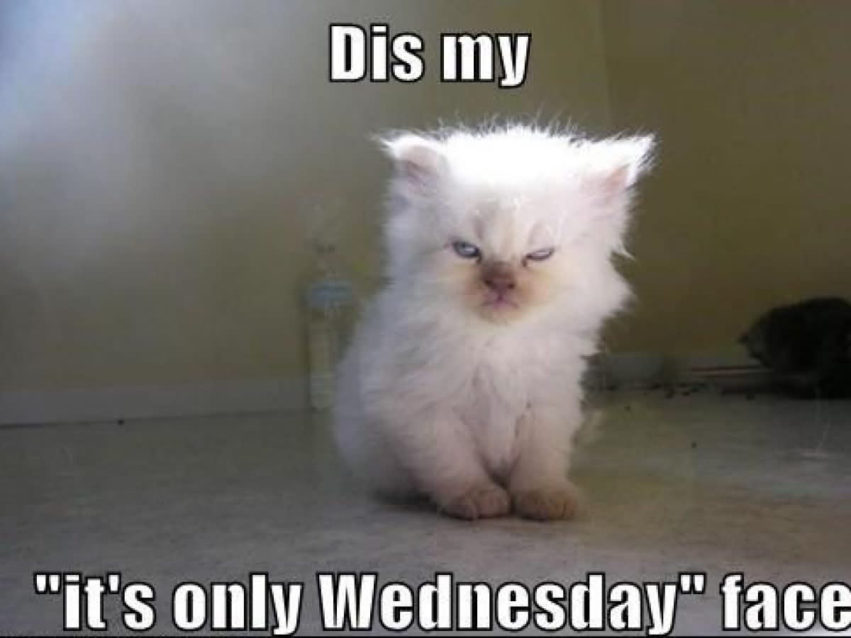 Dis My It's Only Wednesday Face Meme Funny
