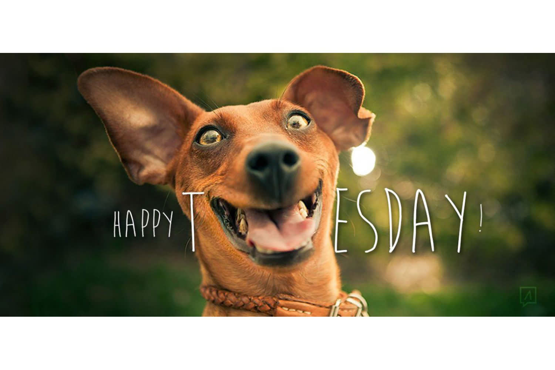 Happy Tuesday Meme Students