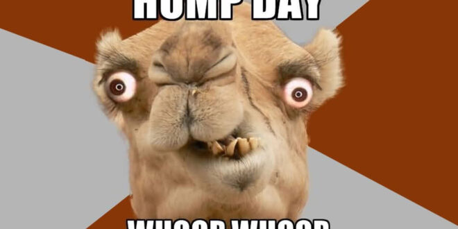 28 Funniest Happy Hump Day Memes That Makes You Fun