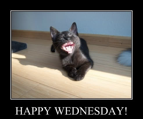 It's Only Happy Wednesday Meme Funny