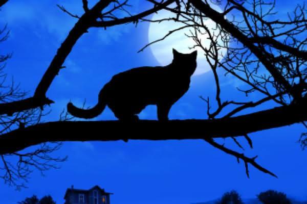 Horror Cat On Halloween