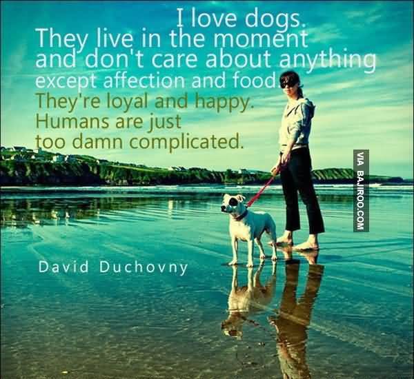 I Love Dogs. They Live In The Moment And Don't Care About Anything Except Affection And Food.