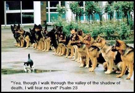 Short Funny Quote With Suprising Image Of Cats & Dogs
