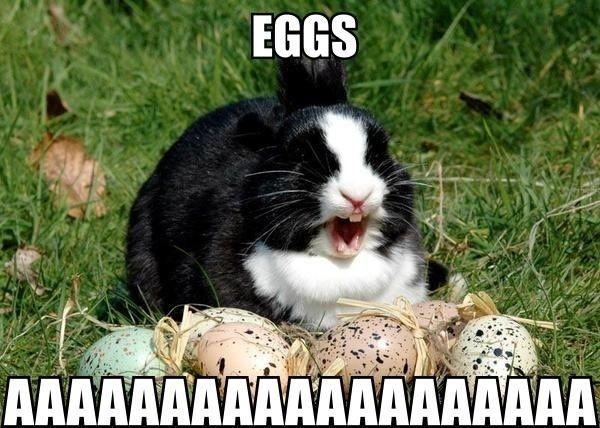 Eggs Aaaaa On Easter Sunday Wishes